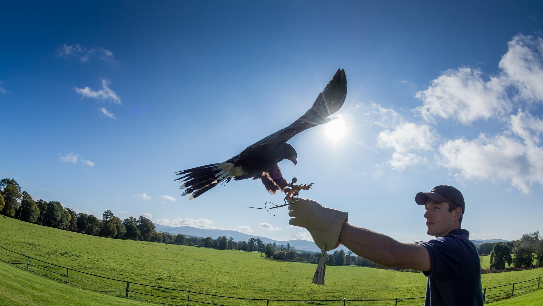 slider-falconry1